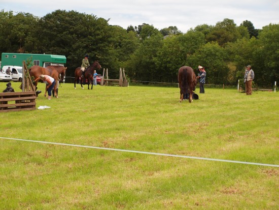 Judging under way in the working hunter